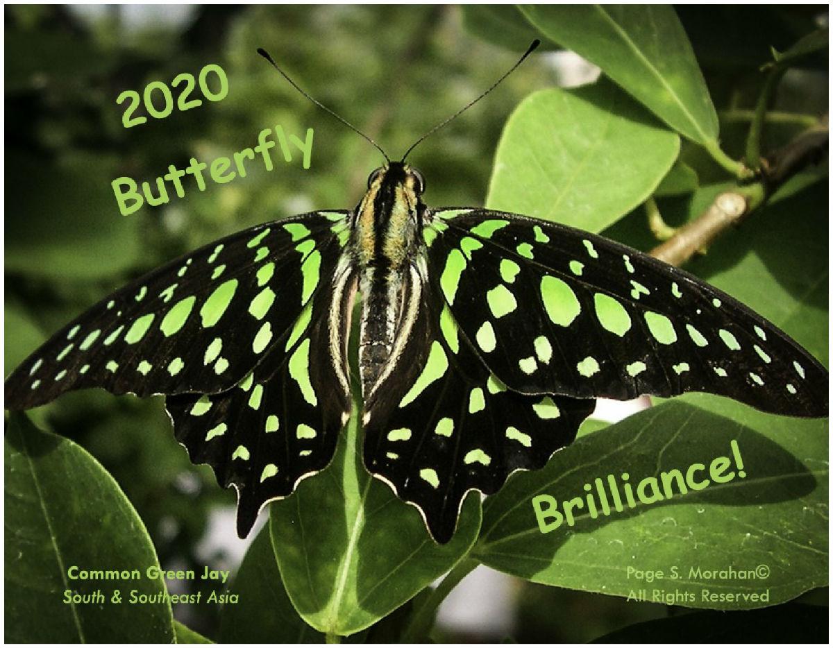 2020 Calendar Createdpage Morahan In Support Of Faimer
