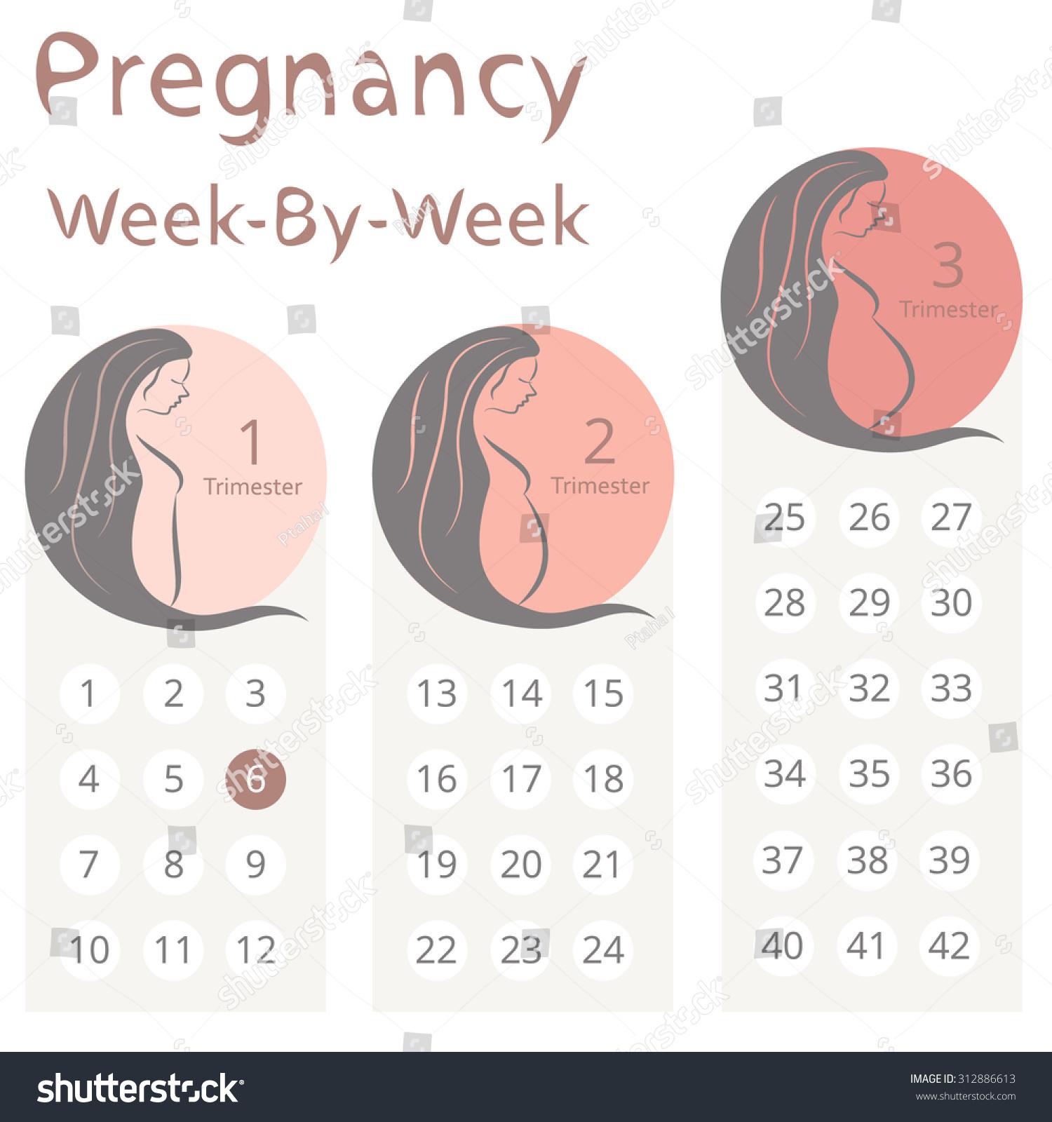 Pregnancy Weeks Calendar - Teke.wpart.co