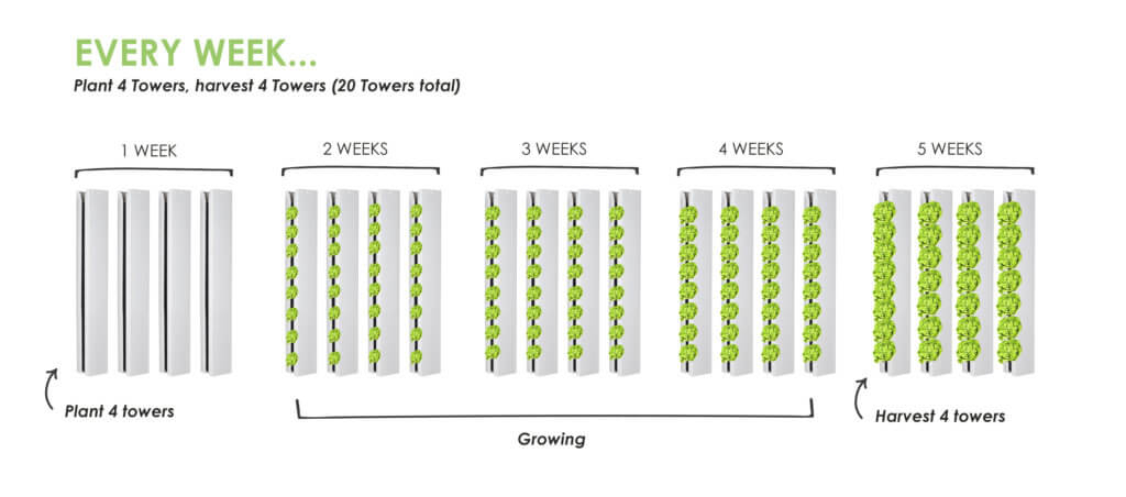 Farmer Tip #1 - How To Make A Planting Schedule - Upstart