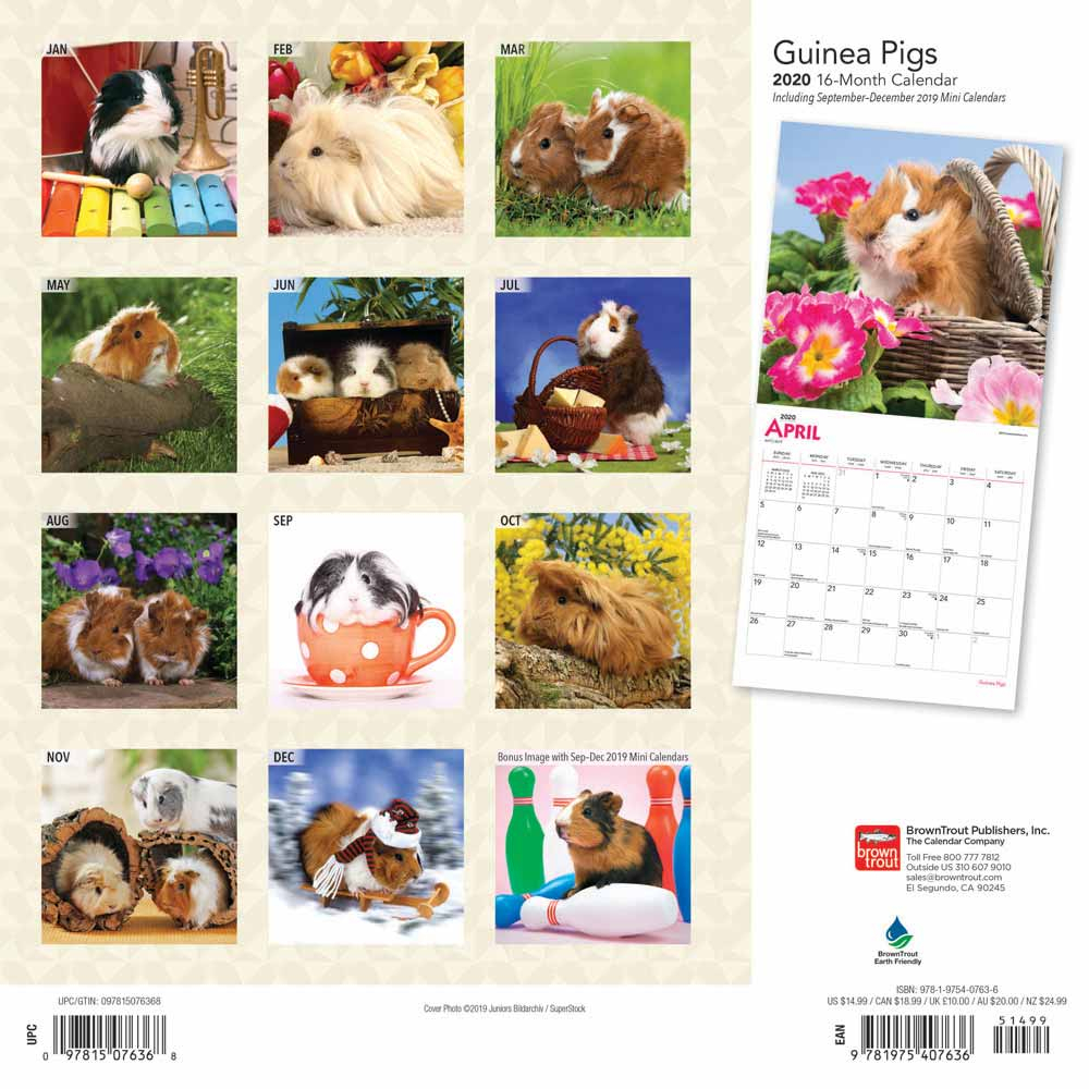 Guinea Pigs Calendar 2020 | Animal Den