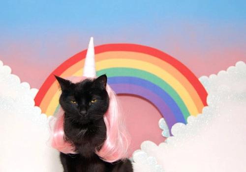 Pinhorseplay On Eye Candy. | Cat Calendar, Cats